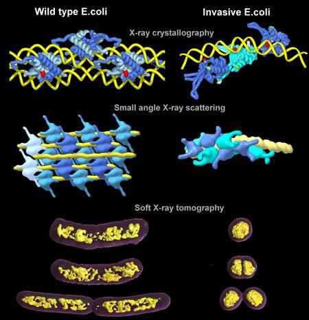 HU-DNA