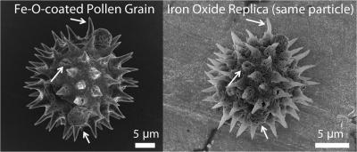 Magnetic Pollen