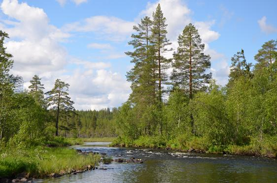 Bjurbäcken Riparian Forests