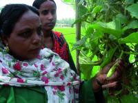 Gourd Growers in Bangladesh