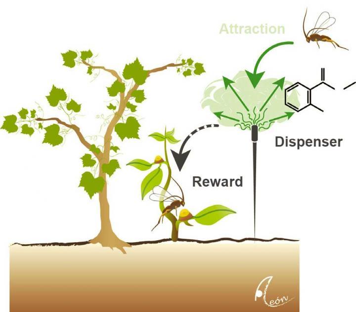 Attract and Reward Concept