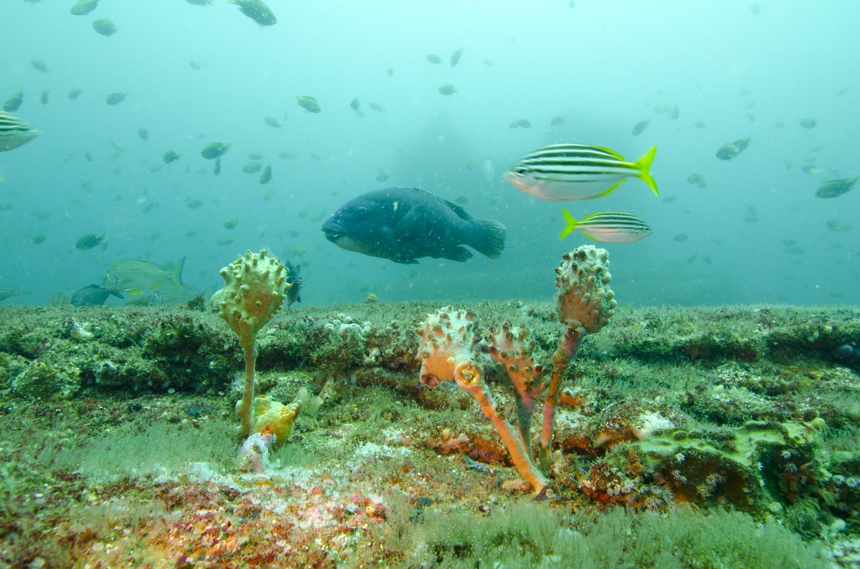 Australian Desalination Plant Attracts Fish