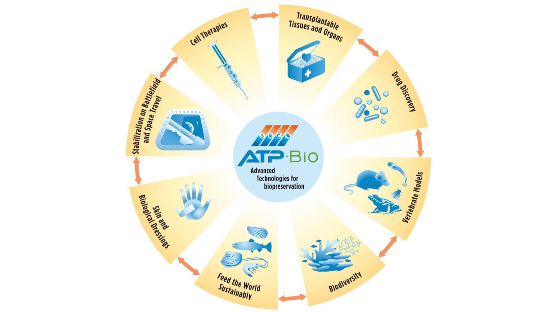 ATP-Bio Loop