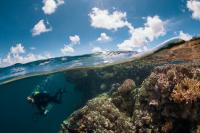 Scientific Diver in French Polynesia