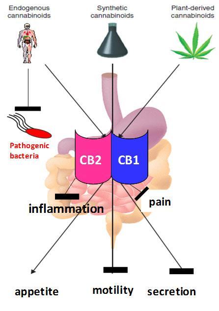 Mammalian Cannabinoid Receptors