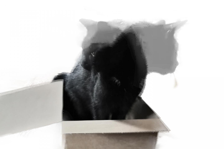 Schrödinger's Cat State