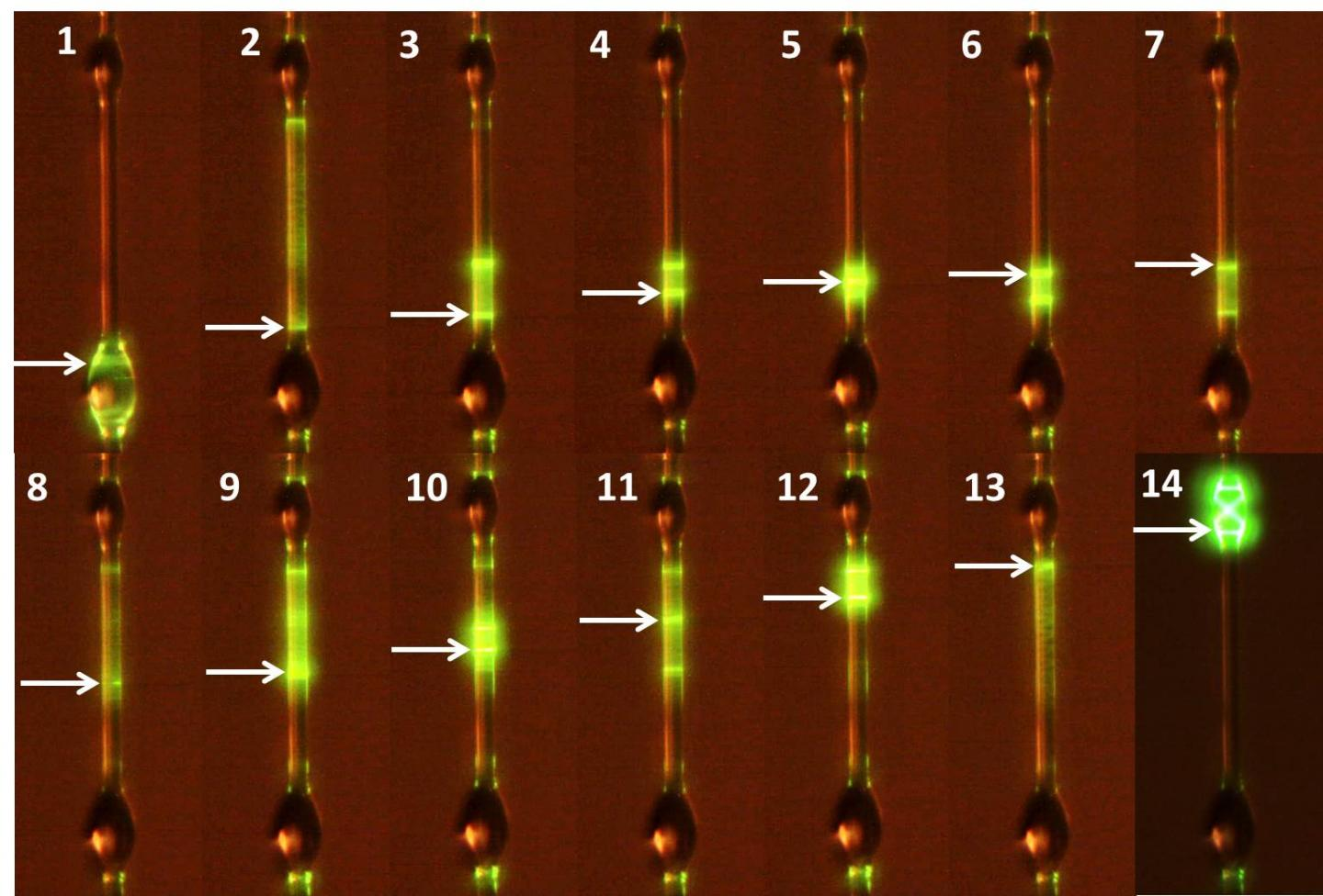 Microlasers in a Thin Coating