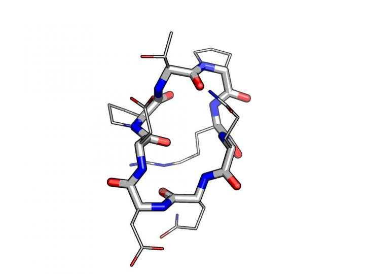 Designed Model for a Peptide