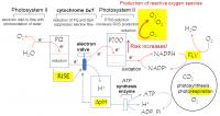How Plants Prevent Oxidative Stress: Fig 2