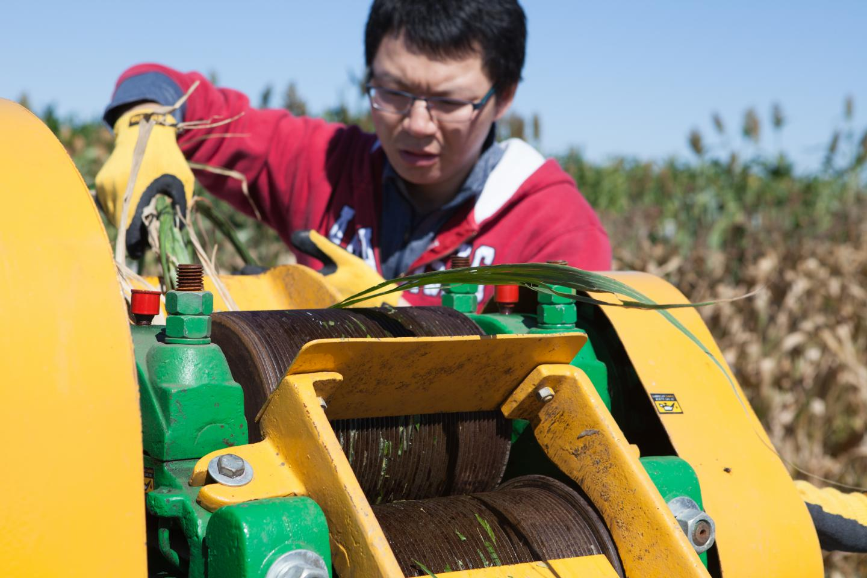 Processing Biofuel Crop
