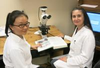 Blood Vessel Discovery a Major Step Toward Growing Kidneys (1 of 3)