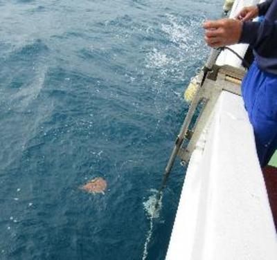 Electric rays for mapping ocean terrain
