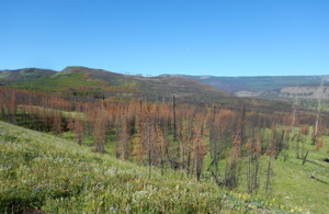 Burned forest of Greater Yellowstone