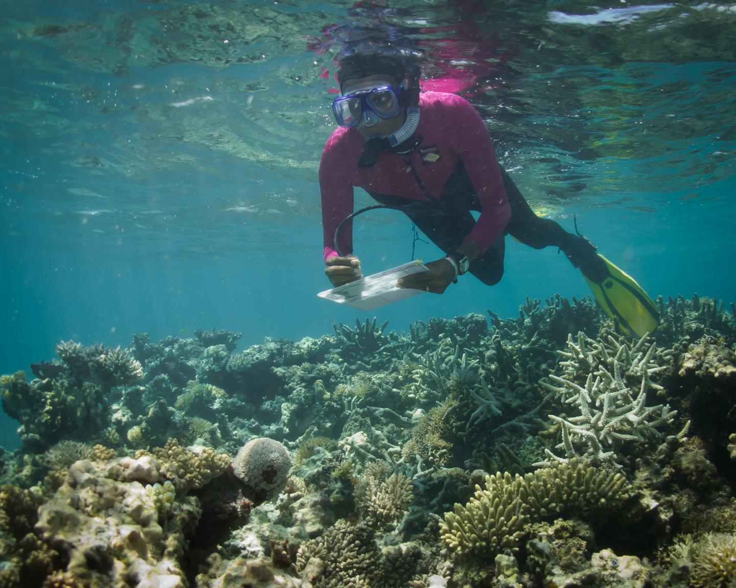 Researcher Gathering Data on Corals in Kenya