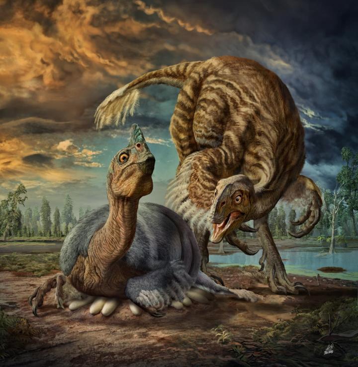 Gigantic Cassowary-Like Dinosaur Named Beibeilong
