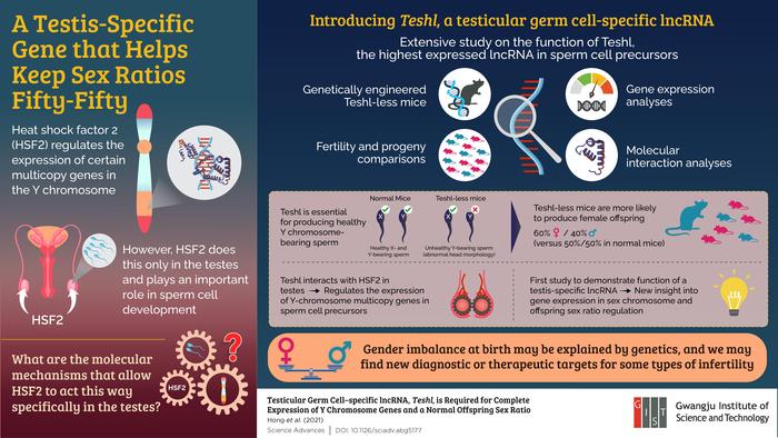 Testis-Specific Gene Involved in Sex Ratio
