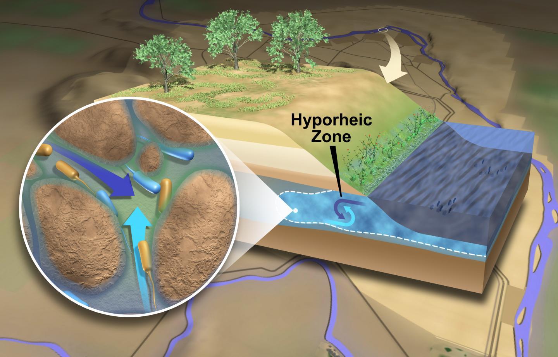 The Hyporheic Zone