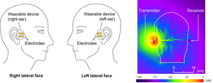 Calculated electric field distribution around a wearable device worn on the ears and the head.