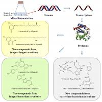Schematic graph of co-culture microorganisms and the mechanism to discover novel bioactive secondary metabolites