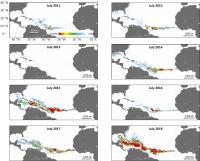 NASA Satellite Data Confirms Seaweed Belt Forms in the Summer