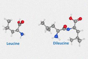 Leucine vs Dileucine