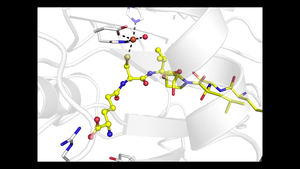 Beta-lactam enzymatic reaction