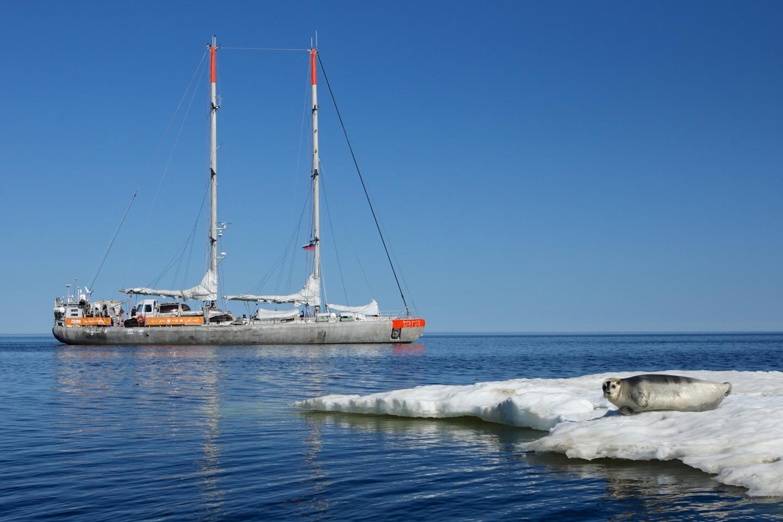 Ocean Current Dumps Plastic in Remote Arctic Waters