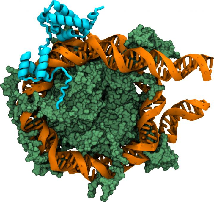 The Oct4-Nucleosome Complex