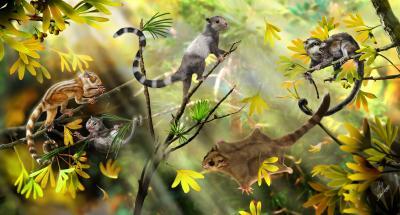 Reconstruction of New Mammals