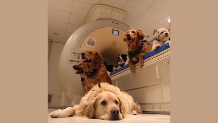 Dog Brains Do Not Prefer Faces