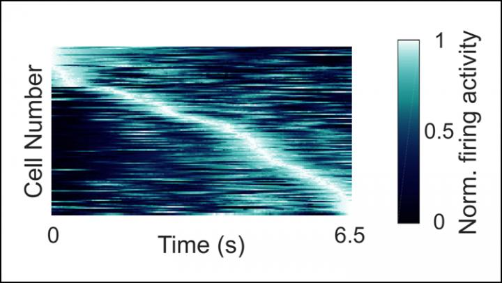 """Human """"Time Neurons"""" Encode Specific Moments in Time"""