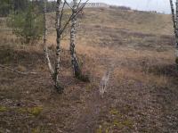 Wolf in landscape