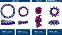 Structural Similarities between Different Membrane Proteins