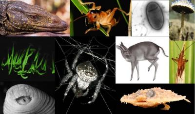 Composite of 2011 Top 10 New Species