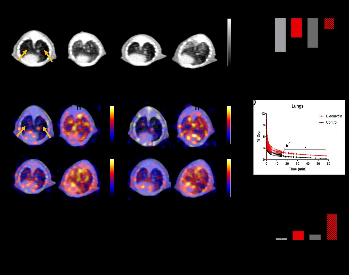 PET and CT images of lung fibrosis in a mouse model.