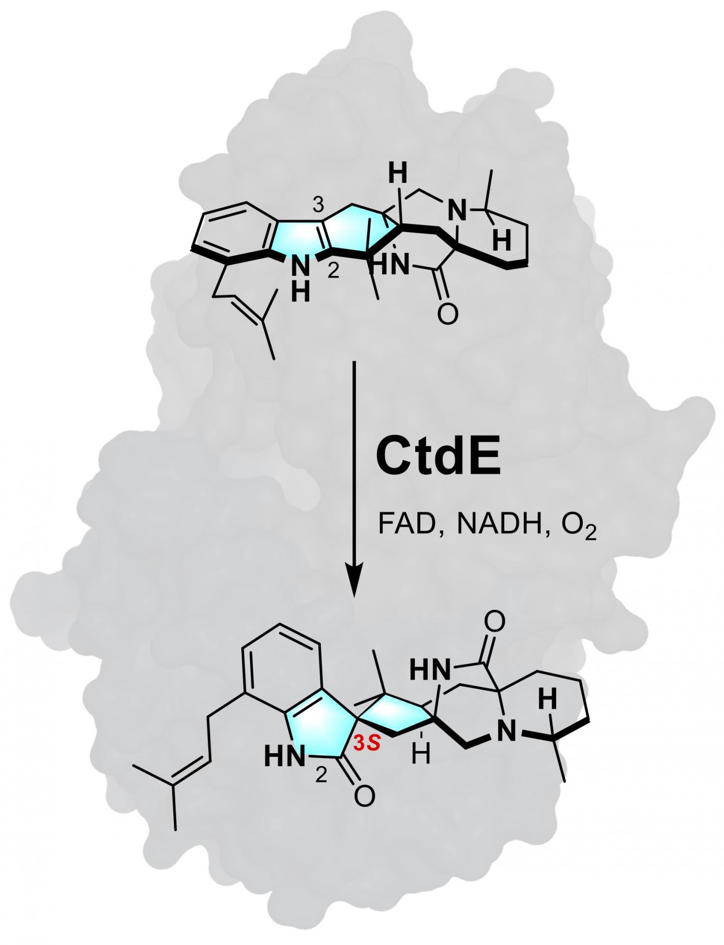 CtdE 1