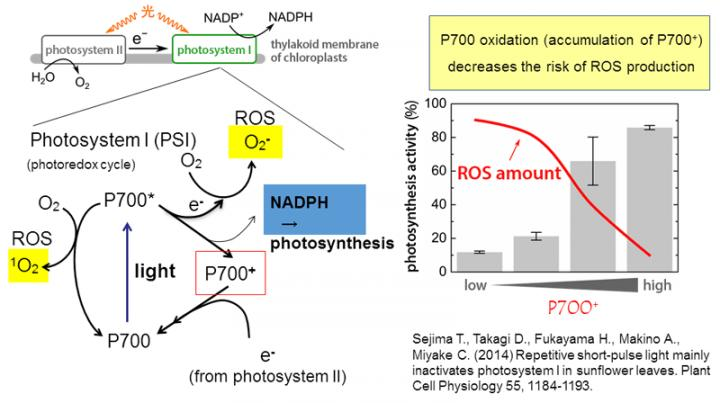 How Plants Prevent Oxidative Stress: Fig 1