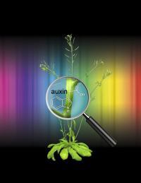 <I>Arabidopsis thaliana</I> (2 of 2)
