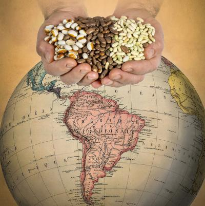 Hands Holding Common Bean Varieties above Globe with American Continents Facing Camera