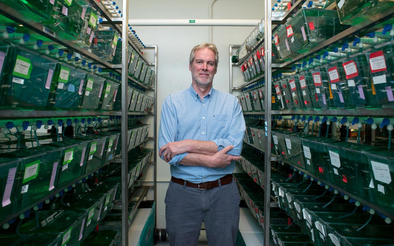 Iain Drummond, Ph.D. with zebrafish