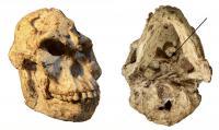 'Little Foot' Skull
