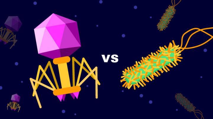 Bacteriophage vs. Bacterium