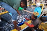 Unidentified Fishermen and Market Women Trading Fish