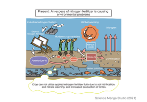 Present issues caused by excess use of nitrogen fertilizer
