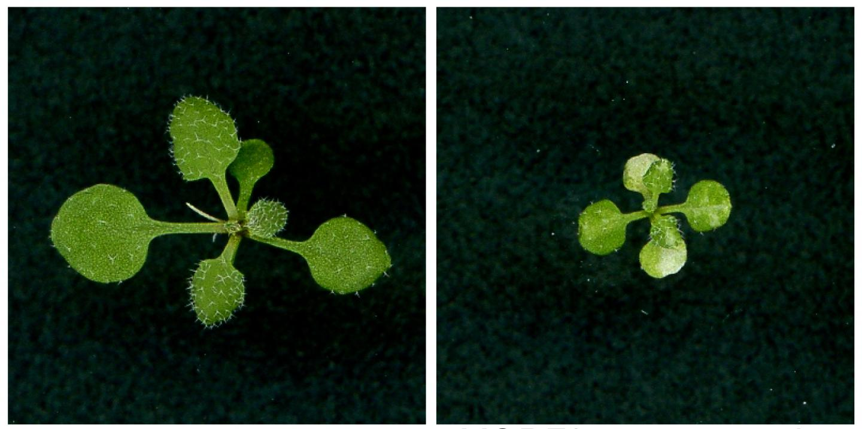 RNA Editing in Plants
