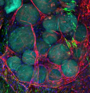 Gel drops for regenerative medicine