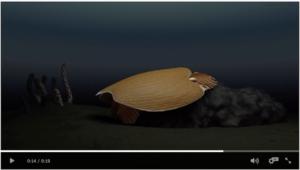 Animation video – ocean swimming