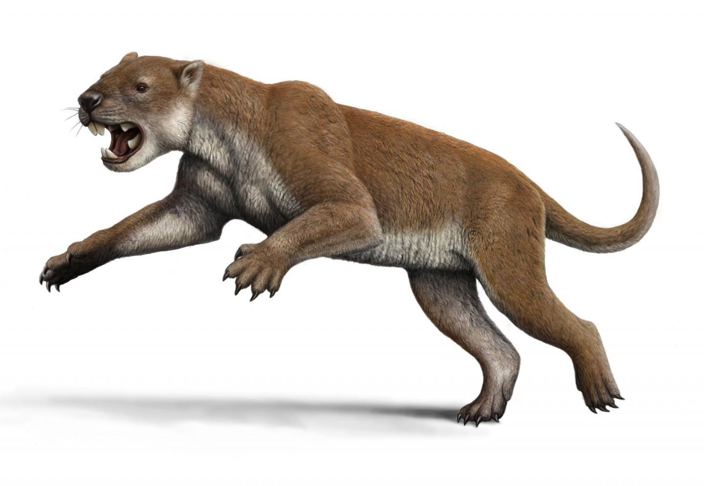 Reconstruction of <i>Thylacoleo</i>