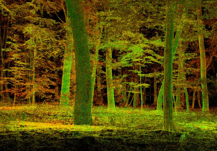 Forest scene in unusual colours: glowing green and red