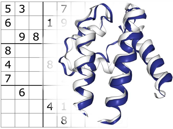 Sudoku-Solving Program Makes First Step in Designing New Proteins